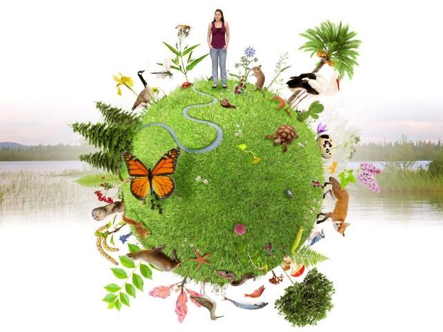 Environnement et Biodiversité